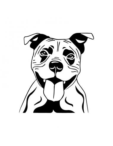 American Staffordshire Terrier Faccia...